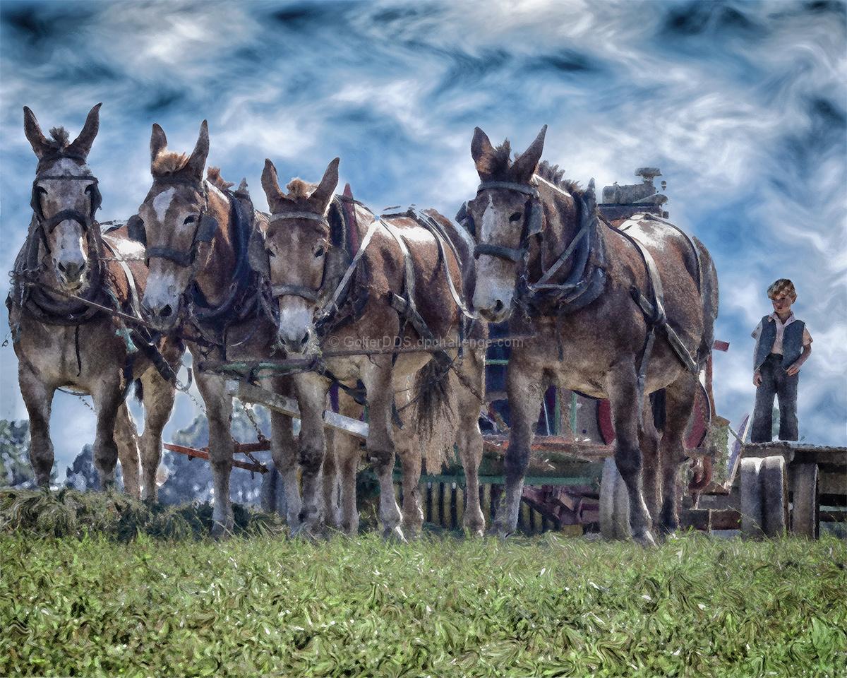 Amish Harvest