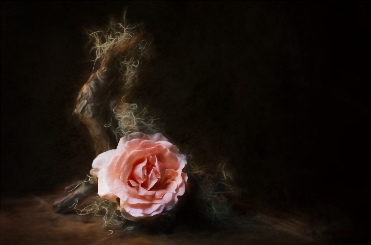Rose with Wood and Tillandsia