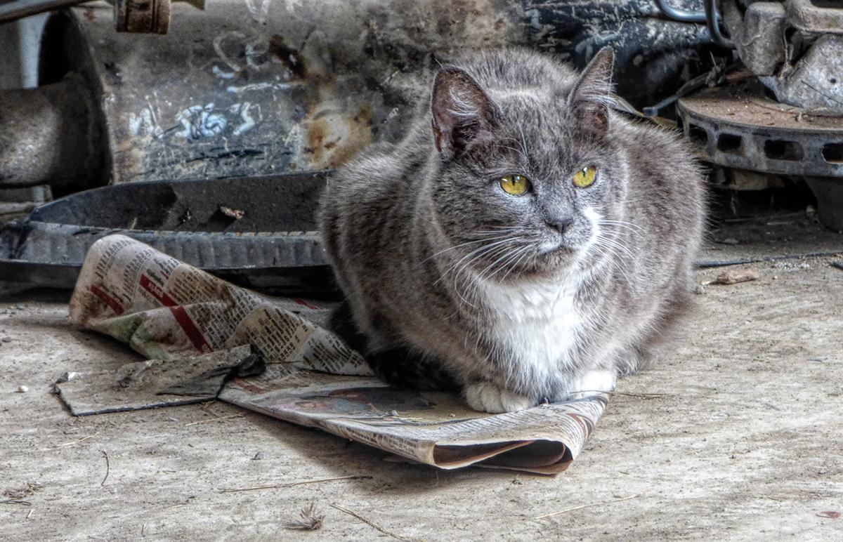Junk Yard Cat
