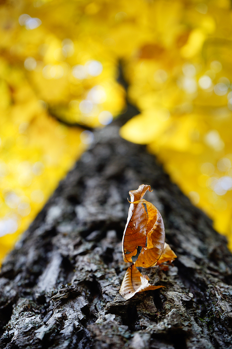 Dead Leaf Sprig