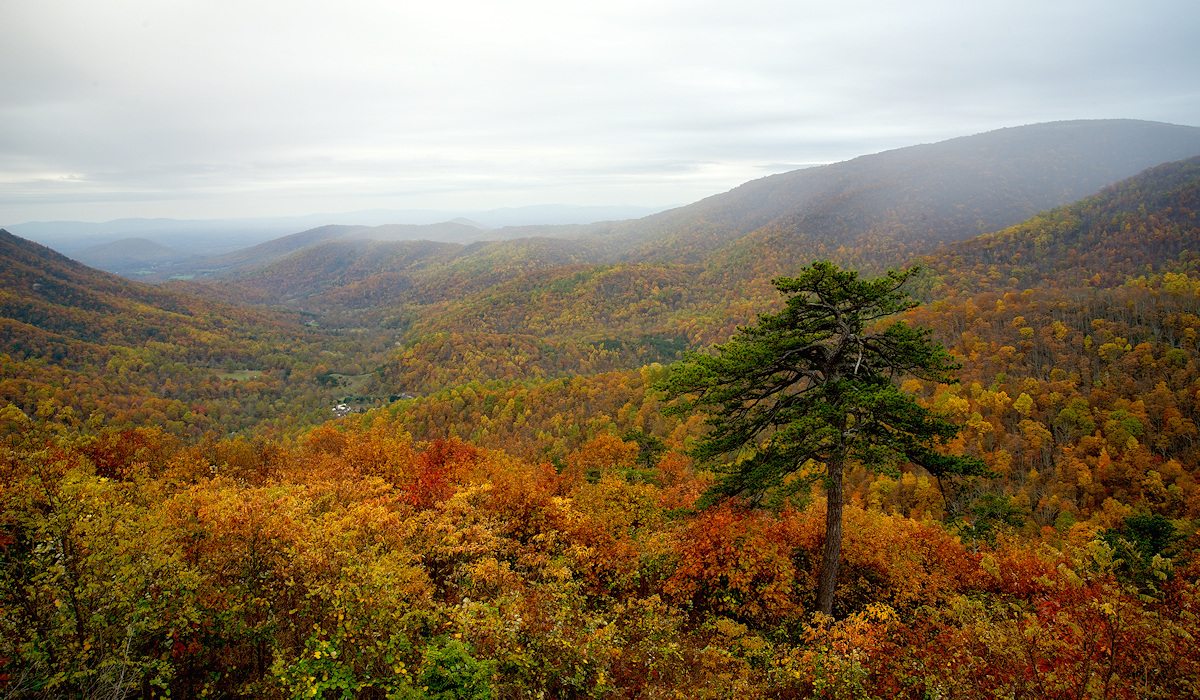 Blue Ridge Mountains : Bacon Hollow : Eastern Slope