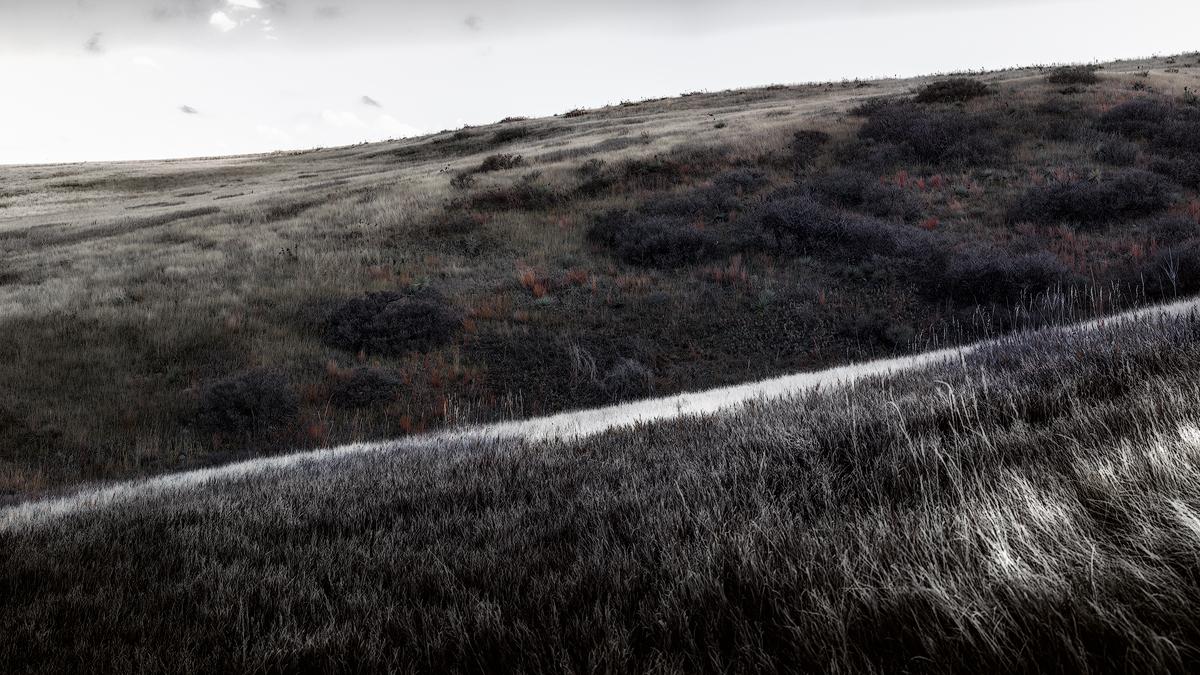 Grasslands Abstract