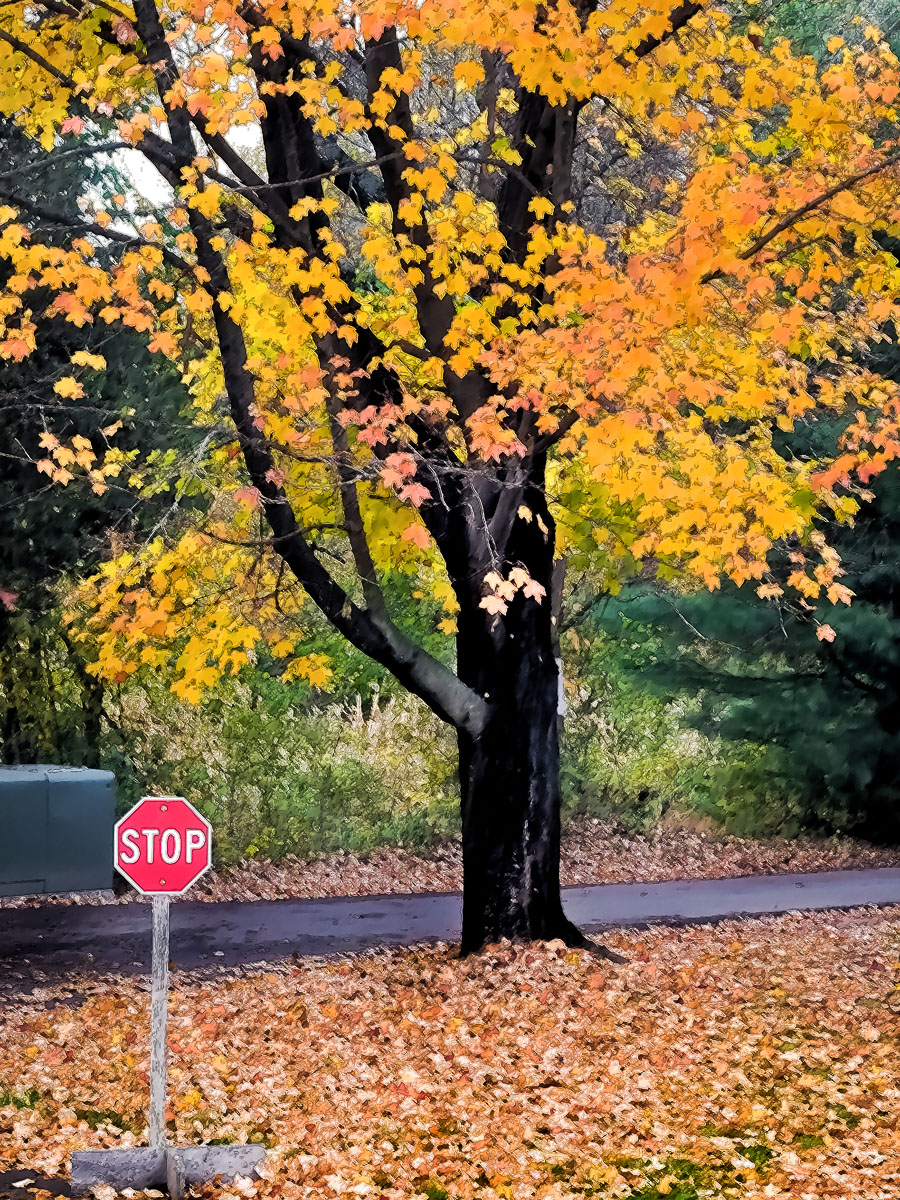 Stop - Enjoy color and nature before you go
