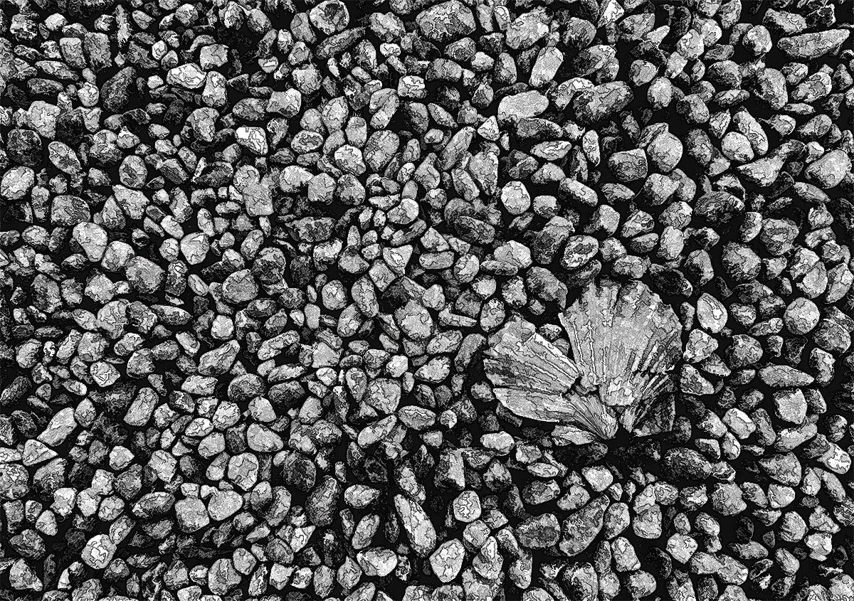 Pebbles & Shell