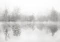 Among the stillness