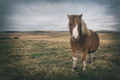 Pony on the moor