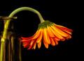 Even Flowers Get Sad