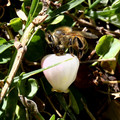 Bee Beguiling