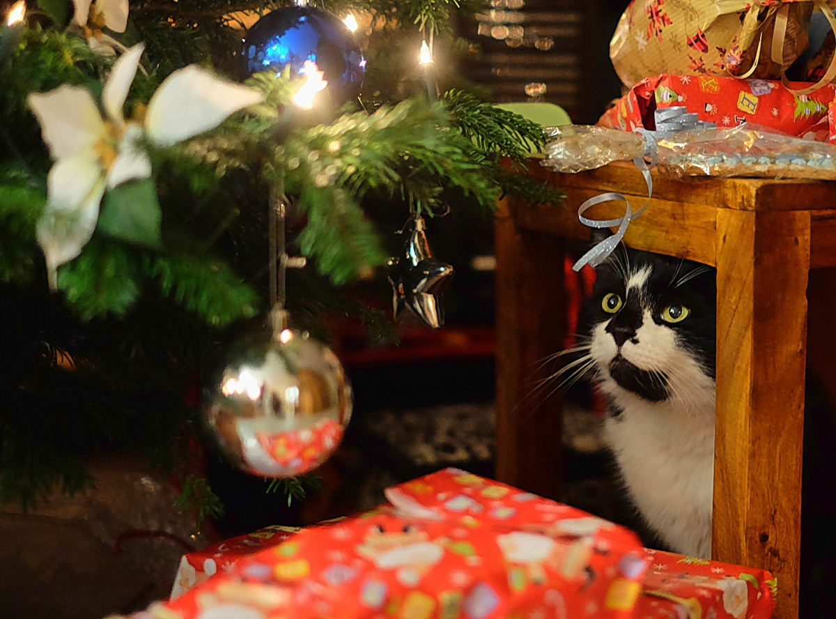 And where is my present?