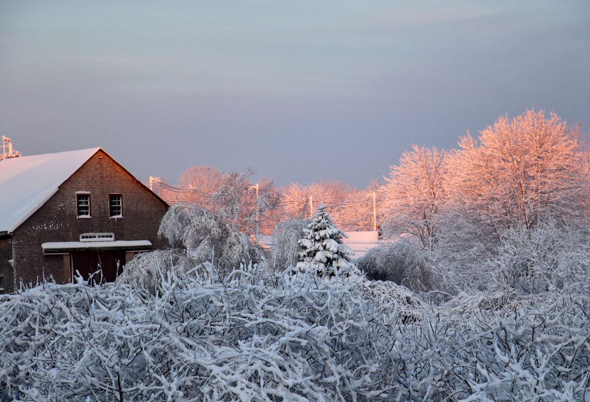 Winter pink sunrise