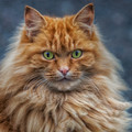 Improve my portrait and animal photography