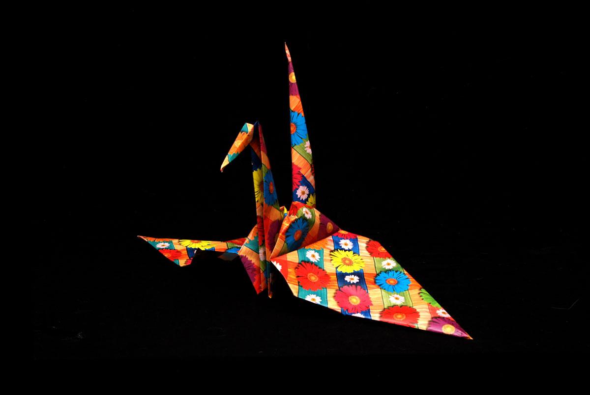 Crane, In Flight, with Xmas Plumage..