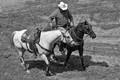 Steer roper's horse