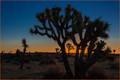 Good Morning Joshua Tree