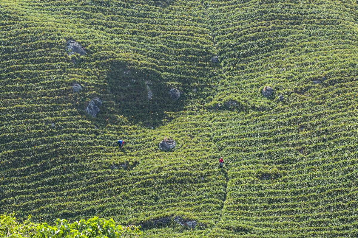 Daylily Farmers