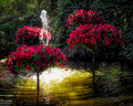 Petunia Trees