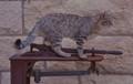 Cat's balance