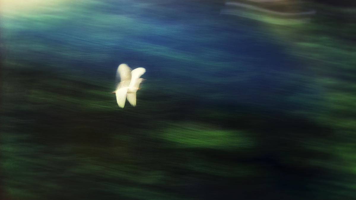 Flight of the Egret