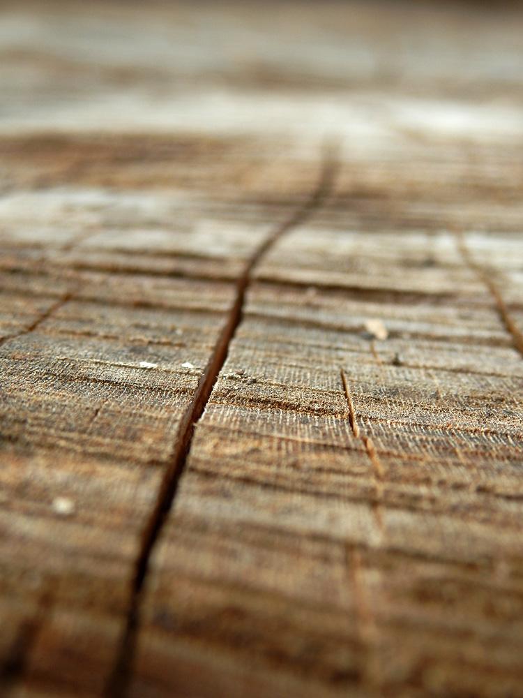 Tree Lines Infinte