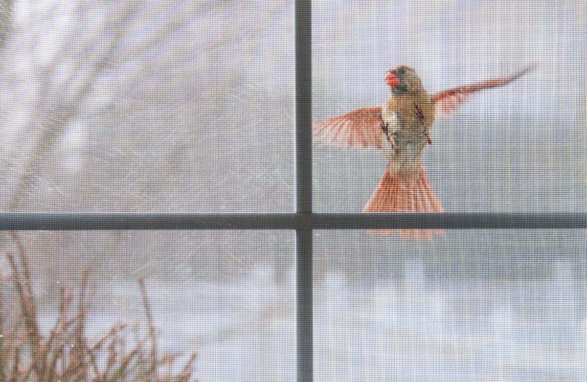 Bird at the Window