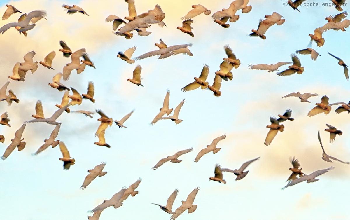 Birds_____________bulky bunch