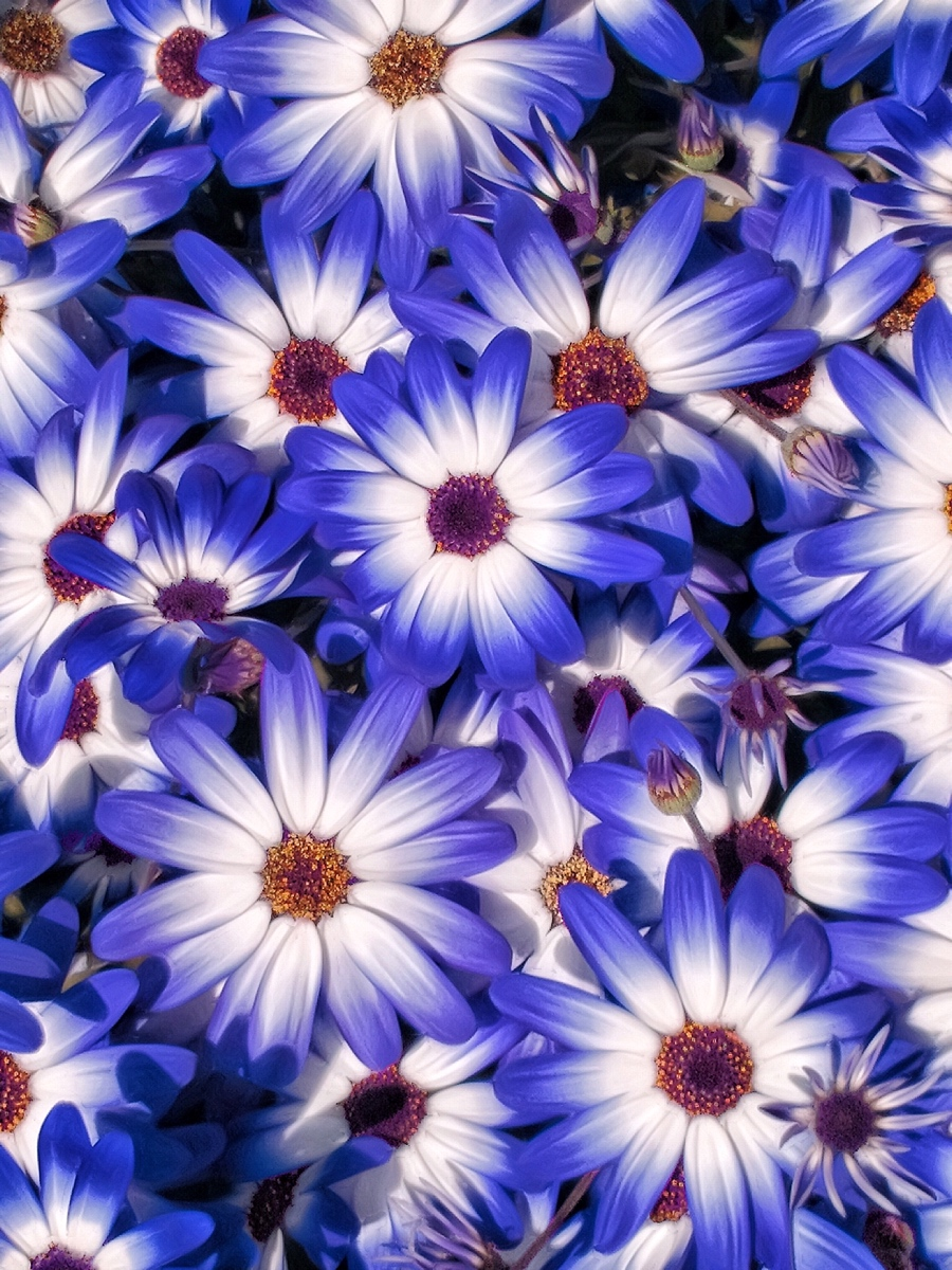 Bountiful Blue Blooms