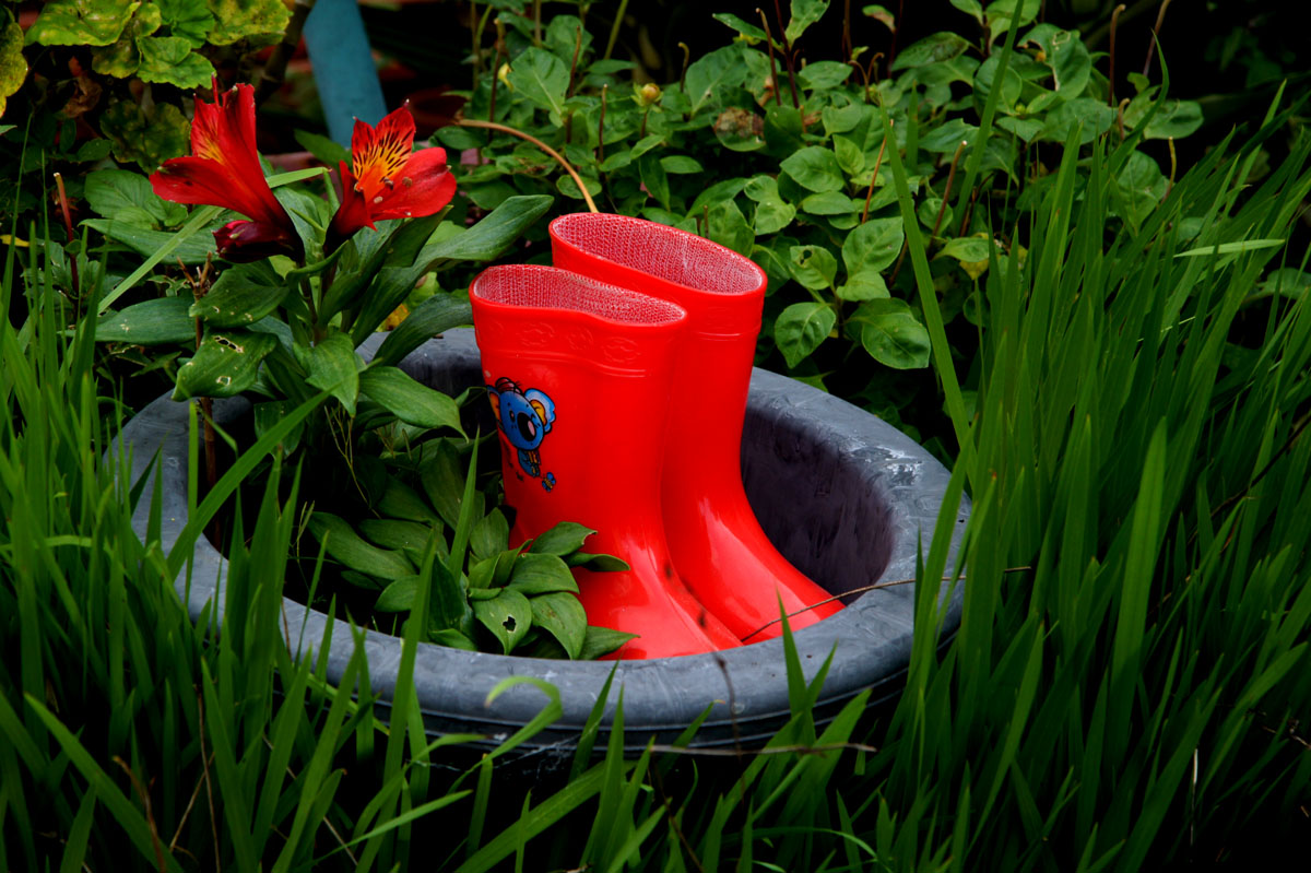 Boots for small gardens !!!!
