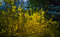 The Bright & Tangled Thicket