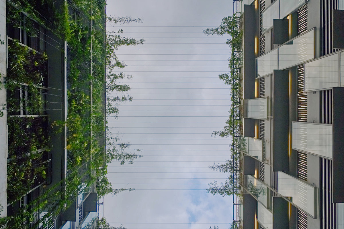 Coexistence: plants and buildings