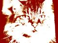 PITA (the cat)