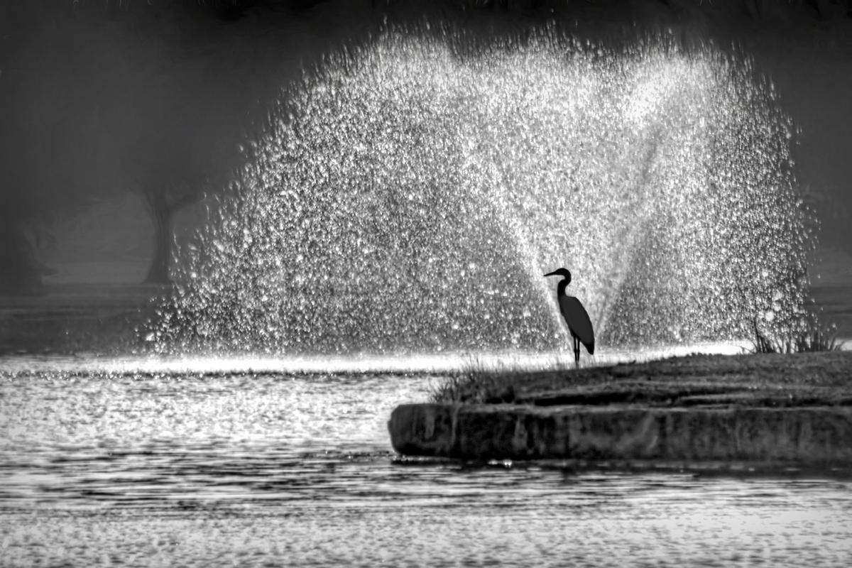 Heron at Halleck
