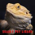 Deadly Pet Lizard
