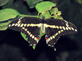 Butterfly_IMG_3676-DPC