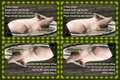 097 Winston Churchill on Pigs (wallet print)