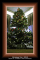 Tree-in_1702_FPO