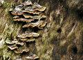 Fungus_IMG_3115-DPCs8
