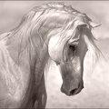 HorseByHighNooner_IMG_1804-sq