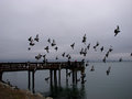 Pigeons_IMG_7637-DPC