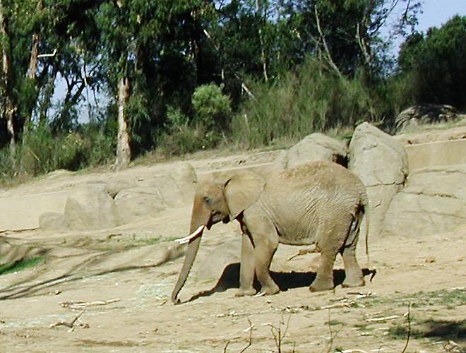 Elephant_PB120054-CU
