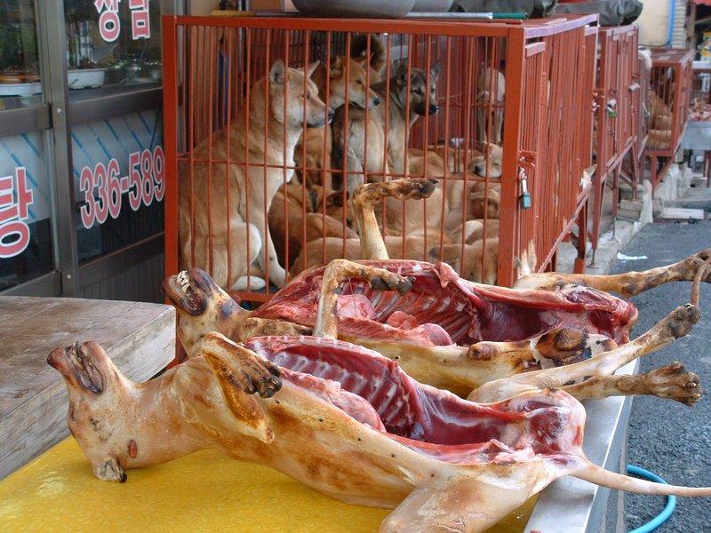 Koreans Eat Dog Korean Dog Market