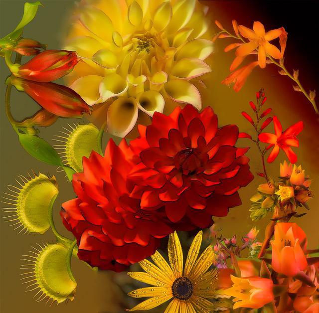 YelloW-orange-collage- [Floral]
