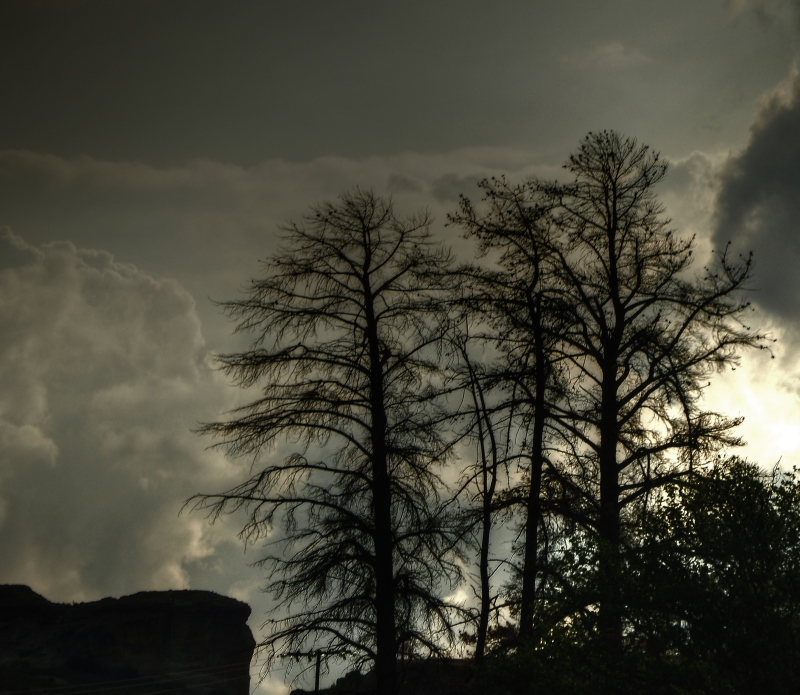 Photogenic Trees