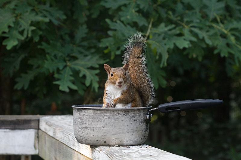squirrel-in-pot2