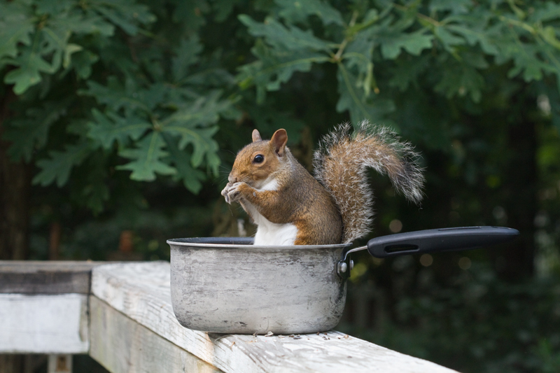 squirrel-in-pot3