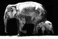 Los Elefantes 2