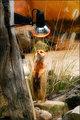 Meerkat Day Spa