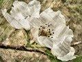 Apple Blossom Wicker