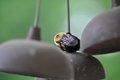 Bumblebee Acrobatics