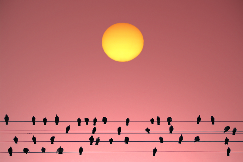 The Solar Spectators