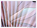 14. Abstract agave